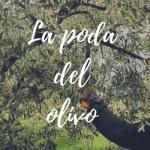 Cómo podar un olivo paso a paso ¿Cuándo? y ¿Cómo?