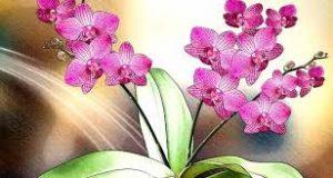 la orquidea desarrollara flores aun más fuertes y colores intensos