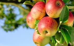 podar un manzano