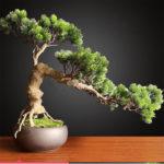 Cómo podar un bonsái: métodos y herramientas
