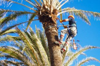 distintos tipo de poda de las palmeras